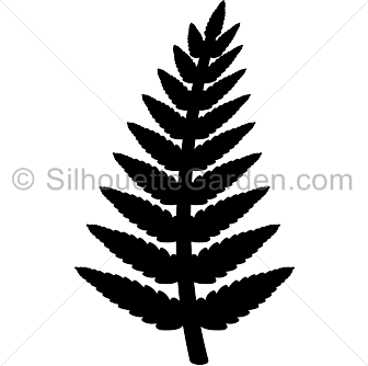 Fern clipart stencil. Pin by muse printables