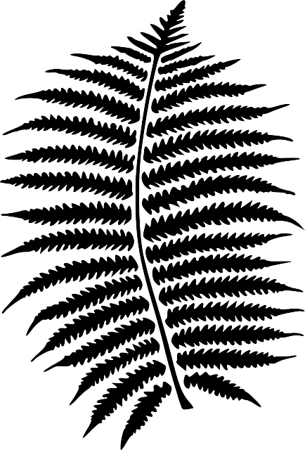 Fern clipart stencil. Free image on pixabay