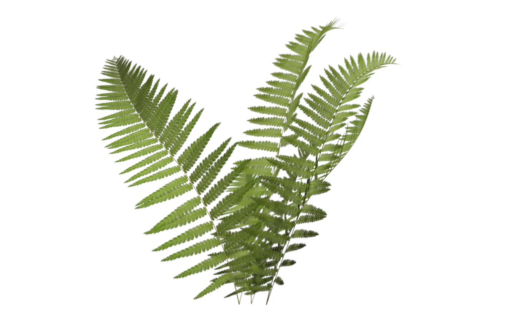 transparent fern pixel