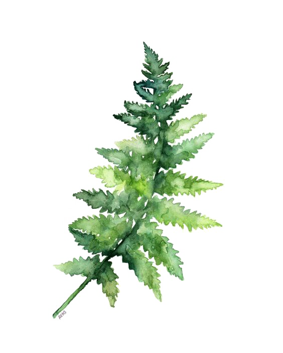 Fern pine png. Paper watercolor painting printing