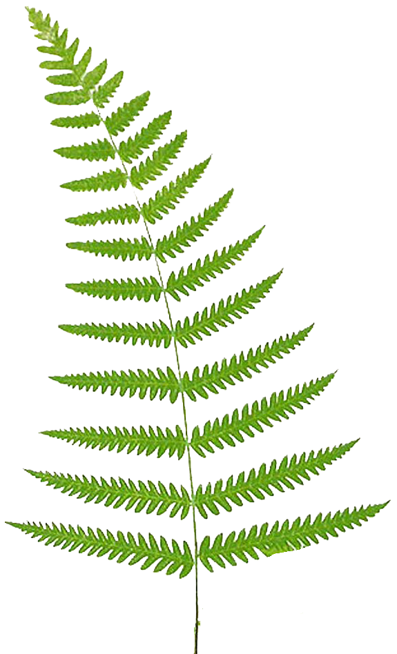 Fern png. Leaping frog designs free