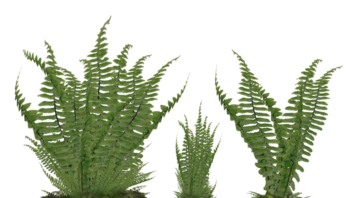 Fern png. Foliage stock photo assorted