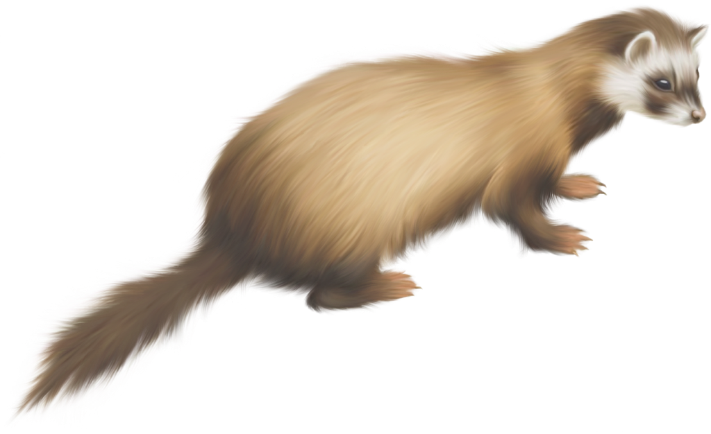 Ferret vector abstract. Png images peoplepng com