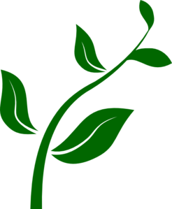 Growth vector plant. Growing clip art graphic