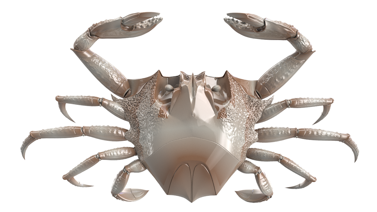 Fiddler crab png. Robotic on behance preview