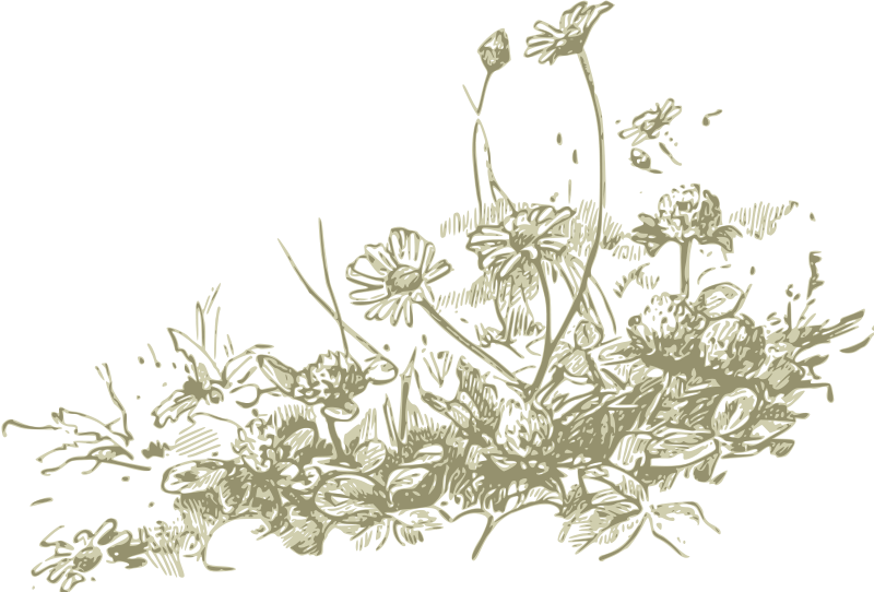 Field clipart . Wildflower vector clip art library library