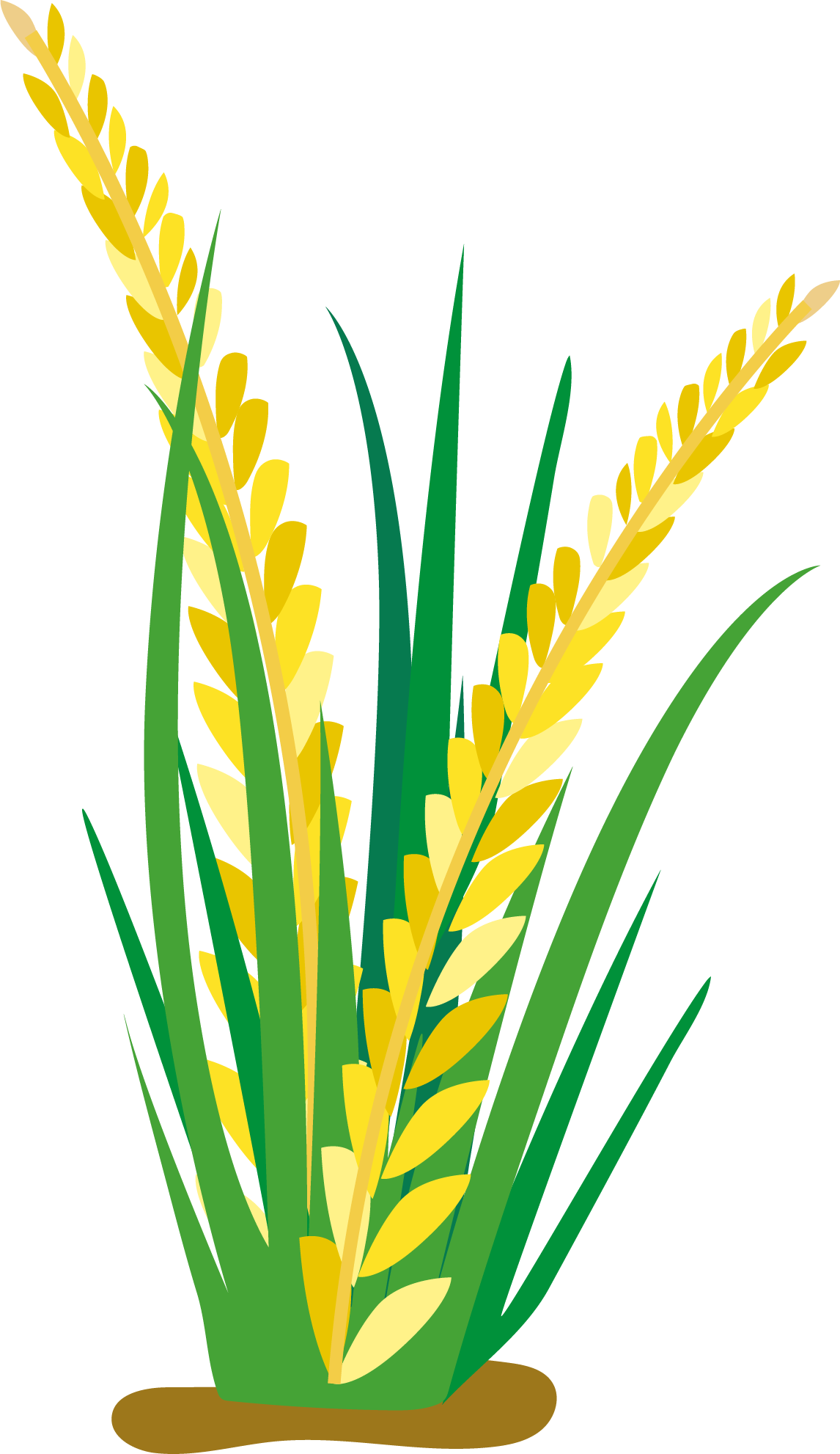 Field clipart plant field. Rice clip arts for