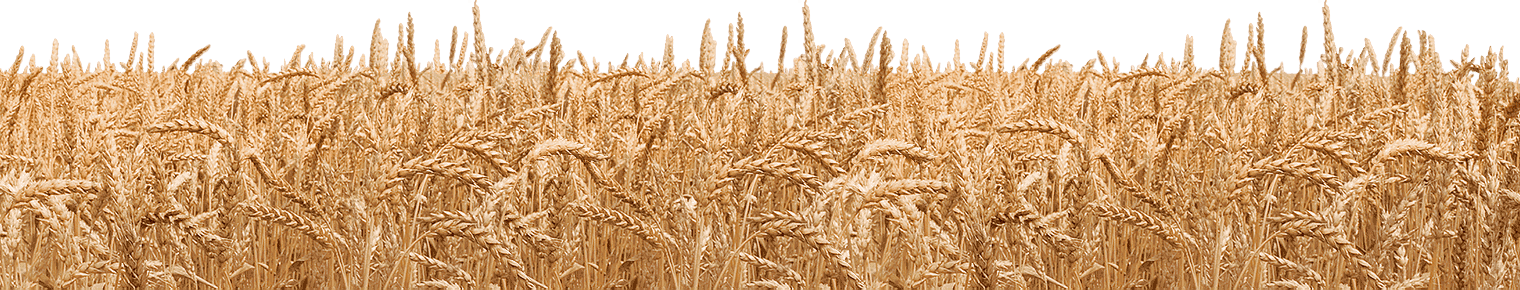 Field clipart wheatfield. Wheat png image