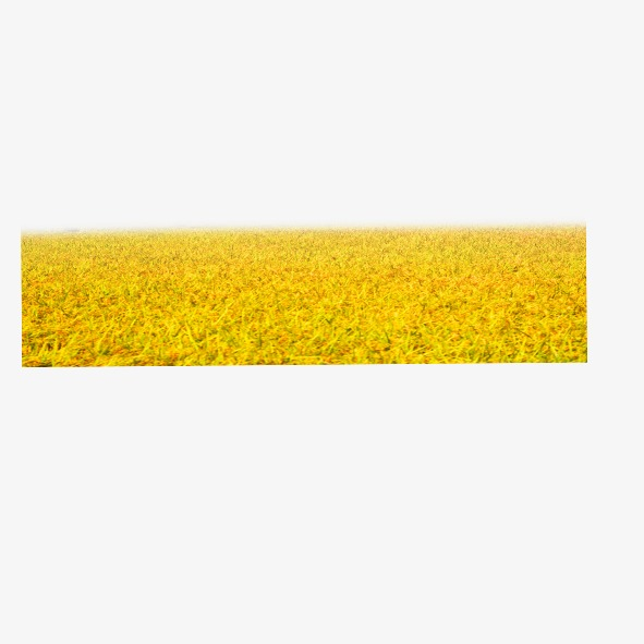 Field clipart wheatfield. Wheat bumper yellow png