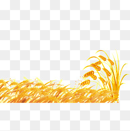 Field clipart wheatfield. Wheat png vectors psd