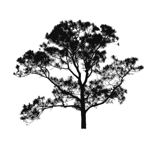 File vector tree. Plan clipart free png
