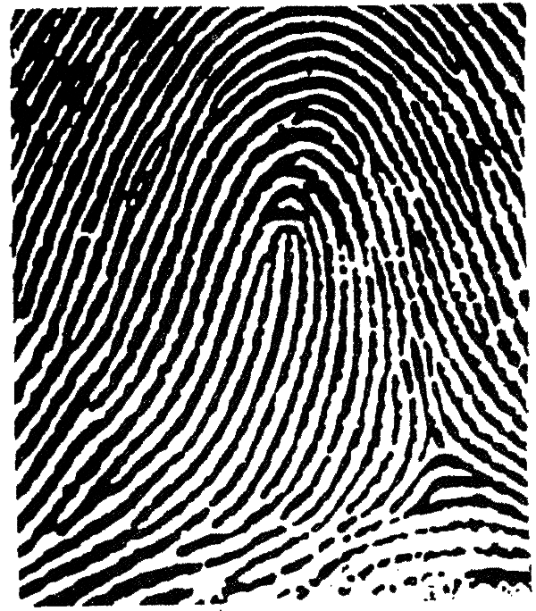 Fingerprint transparent left thumb. Analysis principles this image