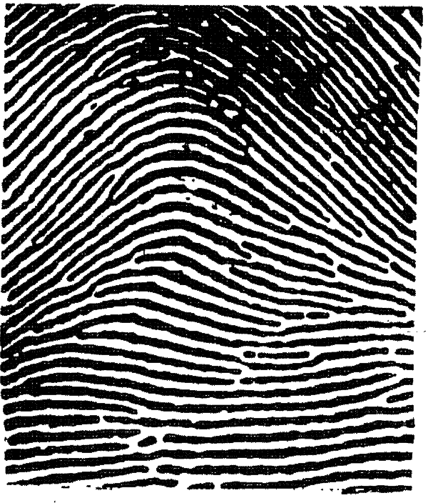 Fingerprint transparent simplified. Analysis principles this image