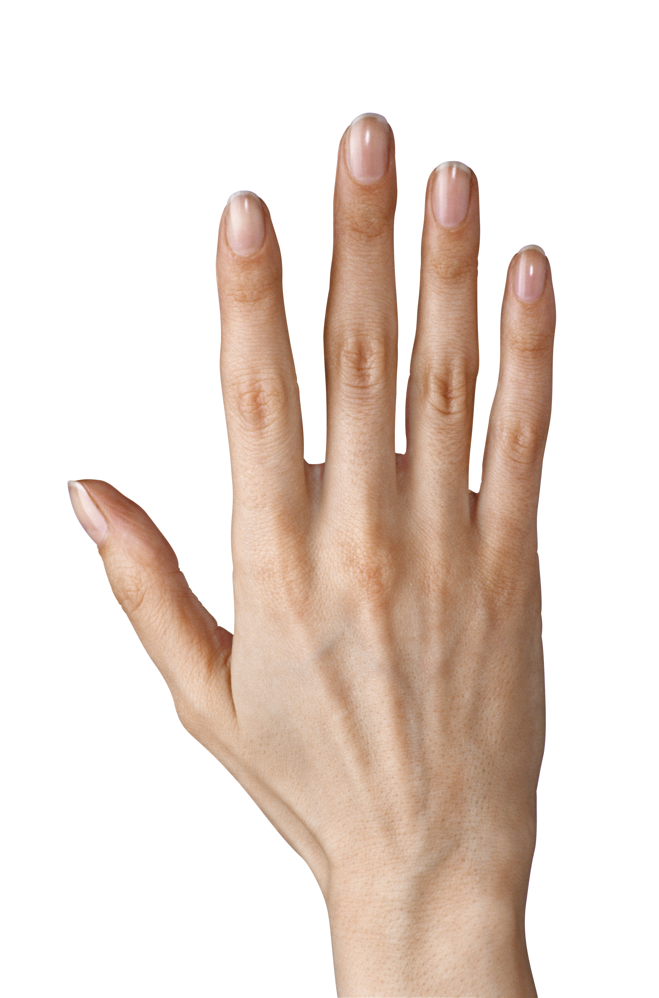 Showing five fingers clipart. Hand finger png clip art freeuse stock