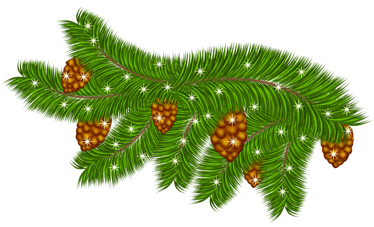 Fir branch png. Transparent pine with cones