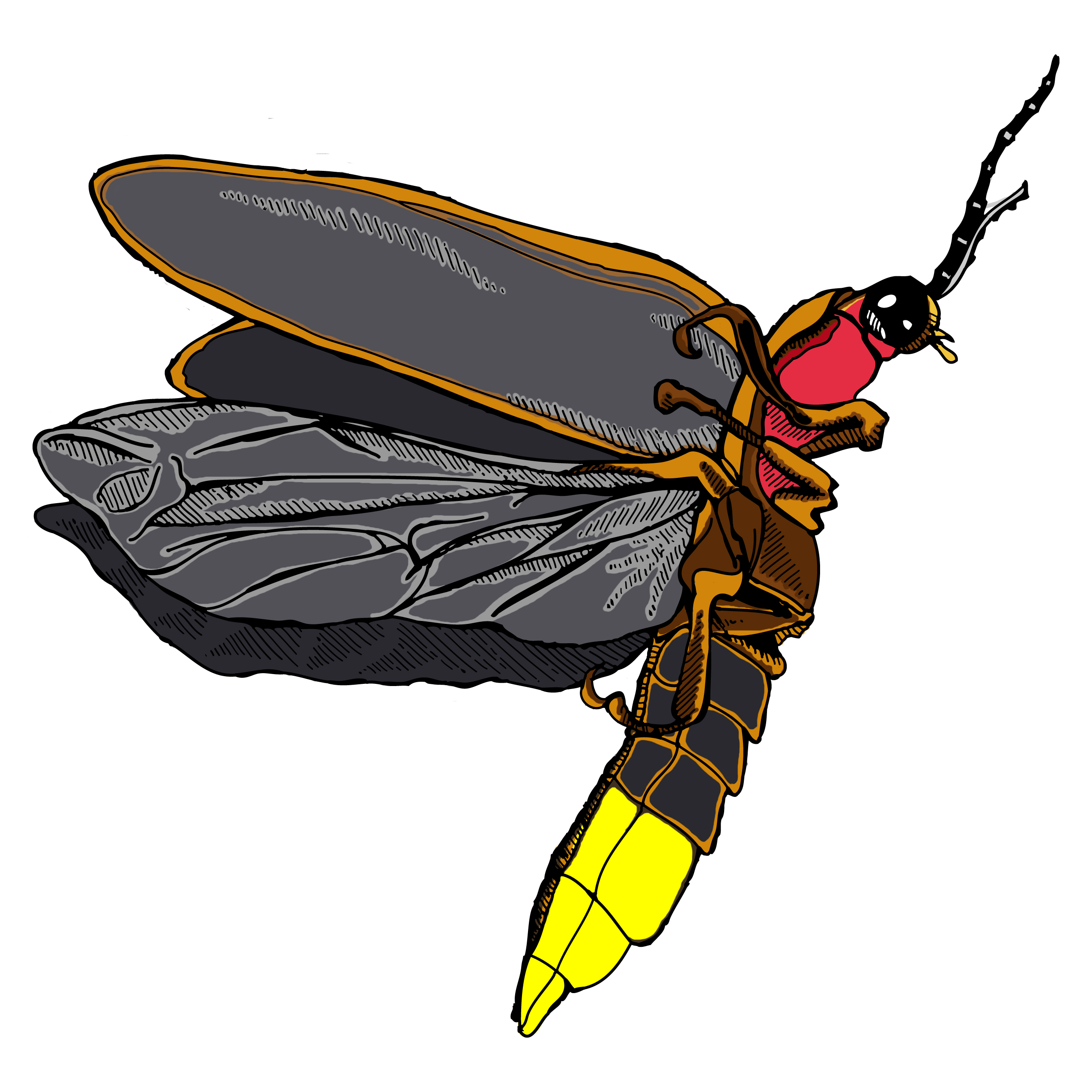 firefly insect png