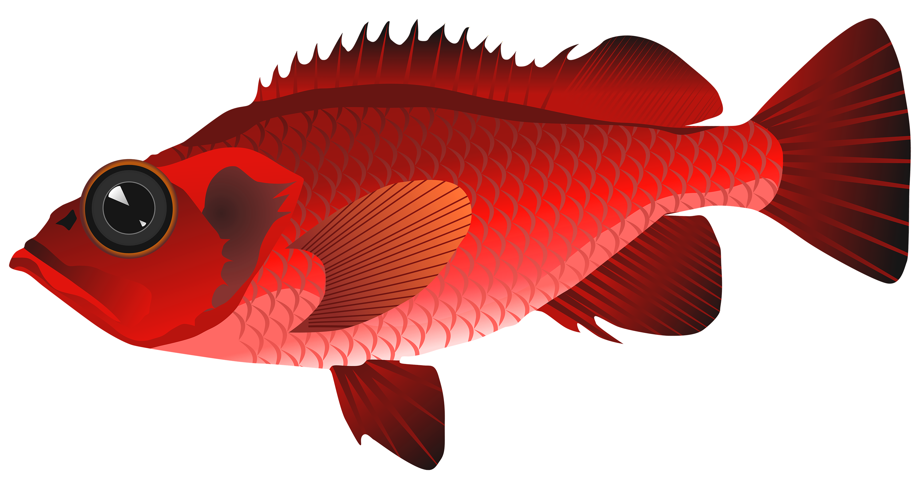 Red Fish PNG Clipart