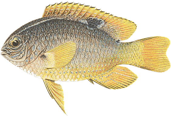 Fish clip art public domain. Free clipart pages of