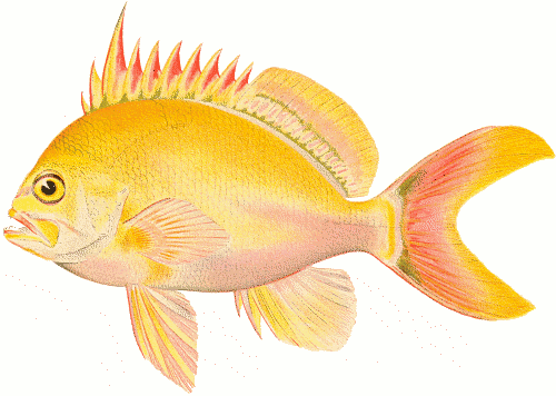 Fish clip art public domain. Free aquarium clipart pages