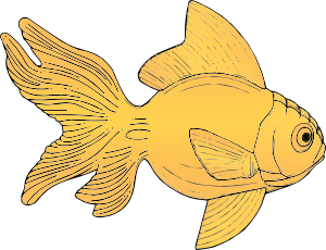 Fish clip art public domain. Golden at clker com