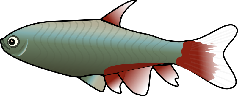 Fish clip art png. Free to use public