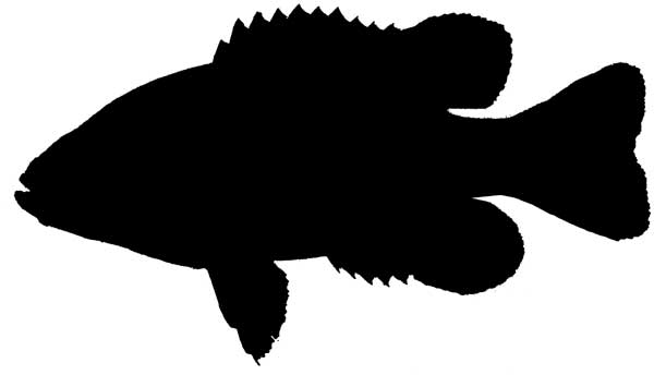 Fish clip art silhouette. Fishing at getdrawings com