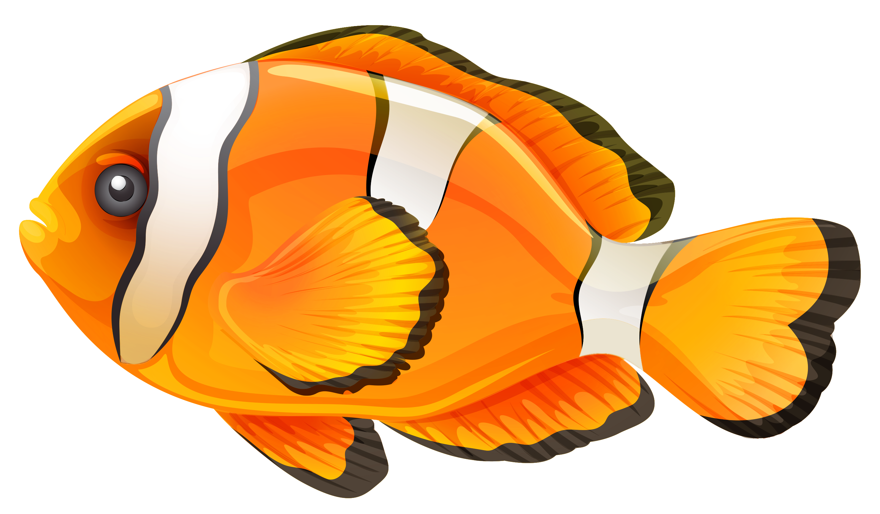 Clownfish png clipart best. Fish clip art transparent background svg transparent download