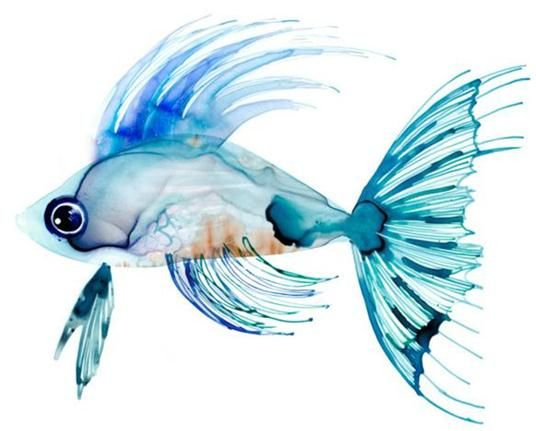 Fish clip art watercolor. Amazing paintings fine blogger