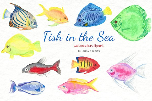 Fish clip art watercolor. Clipart pencil and in