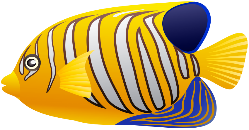 Fish clipart coral reef fish. Download yellow png photo