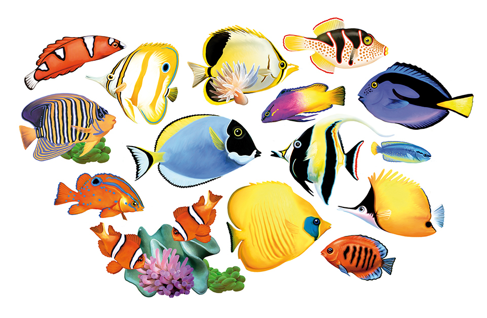Fish clipart coral reef fish. I shaped puzzle puzzlewarehouse