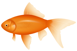 Fish clipart pond. Nets and netting products