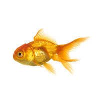 Fish png. Download free photo images