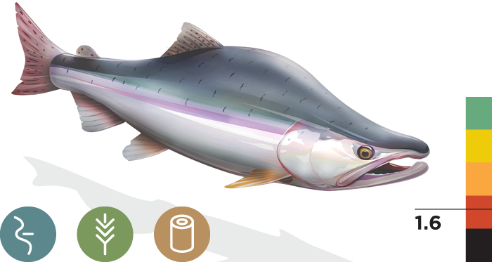 Fish salmon with water png. Pink california trout inc