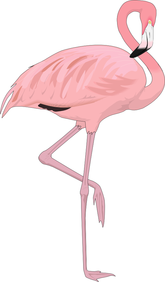 Flamingo clip face. Free to use clipart