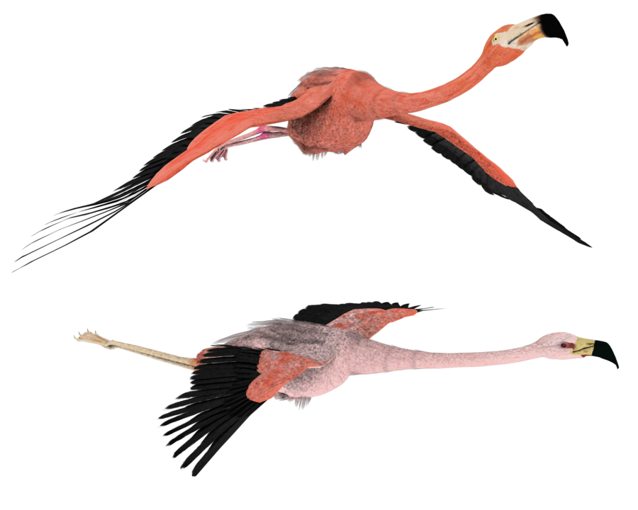 Flamingo clip flying. Clipart pencil and in