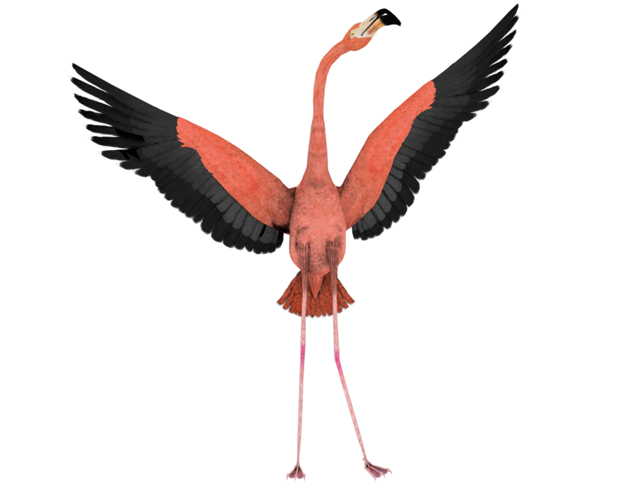 Flamingo clip flying. Free cartoon pictures download