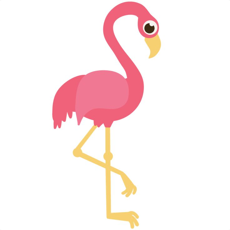 flamingo clipart kid