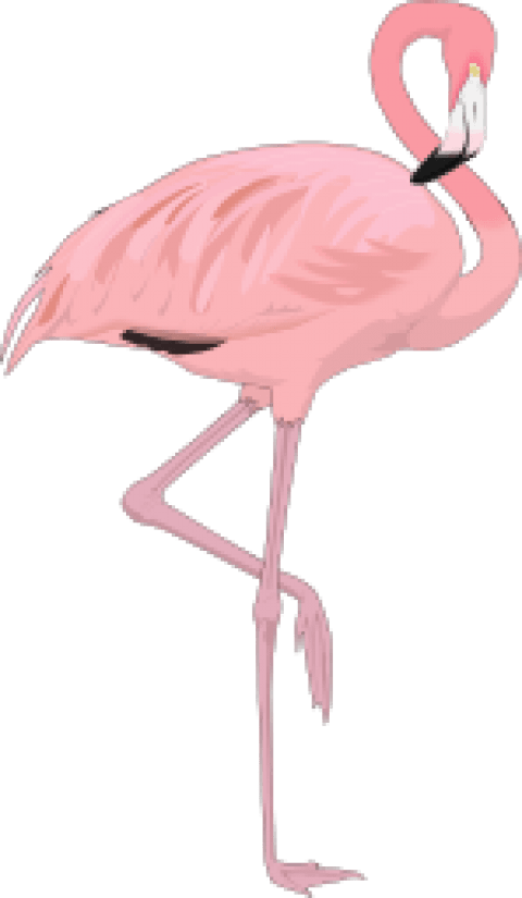 Flamingo clipart png. Free images toppng transparent
