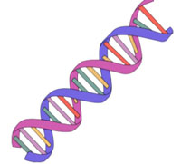 Flash clipart animated. Science gifs dna strands
