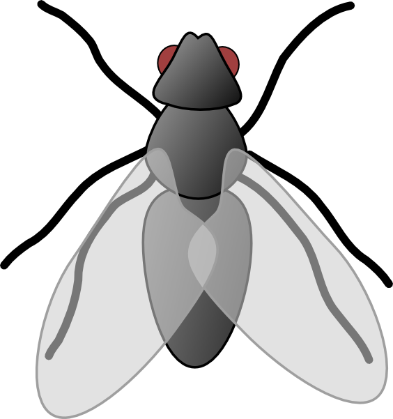 Flies clipart. Lord of the clip