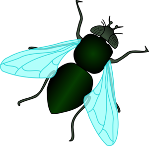 Flies clipart. Fly free