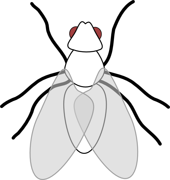 Flies clipart. Free black fly cliparts