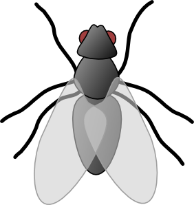 vector insects svg