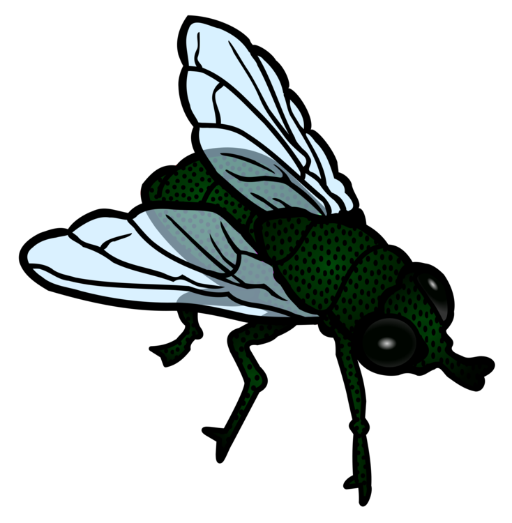Flies clipart mosquito. Insect housefly flight download