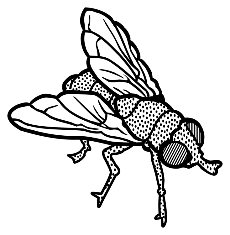 Drawing insects stick insect. Housefly black and white