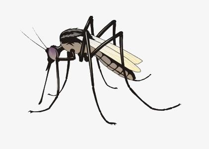 Flies clipart mosquito. Cartoon insect png image