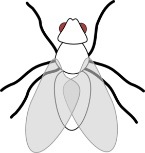Flies clipart mosquito. Fly clip art at
