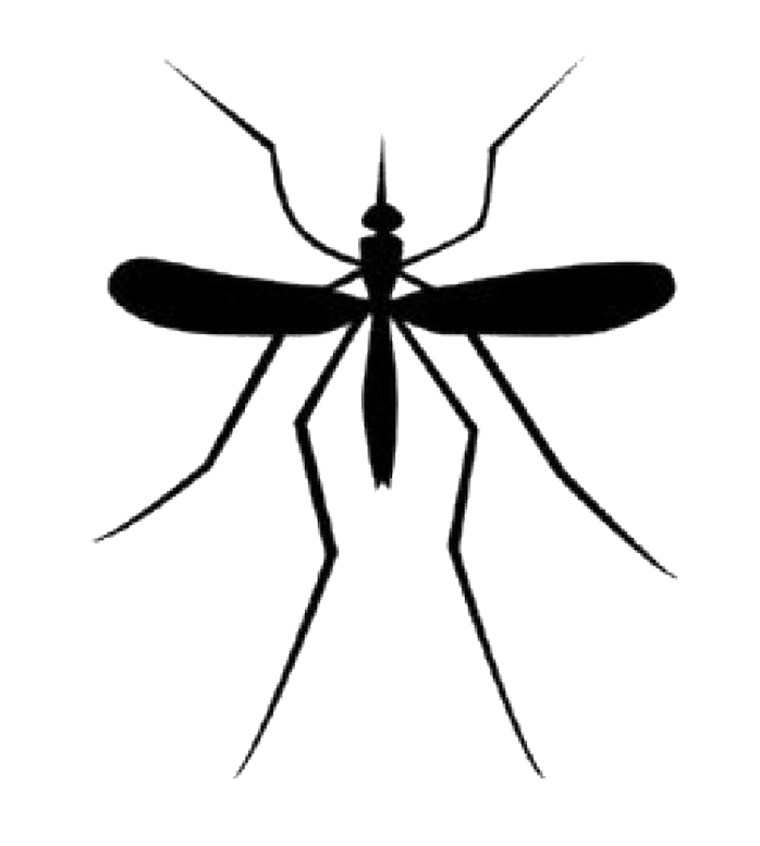 mosquito silhouette png