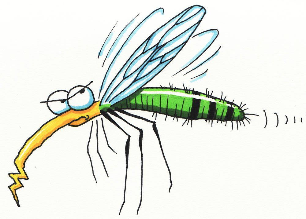 Flies clipart mosquito. Sample collected test positive